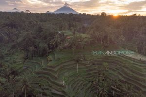 Photographing Sunrise at Tegallalang Rice Terraces in Ubud, Bali Indonesia